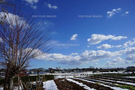 空の写真素材 [FYI01159815]