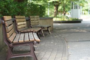 晴れた緑の公園のベンチの写真素材 [FYI01159979]