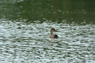 宮古島/冬の干拓池の写真素材 [FYI01159986]
