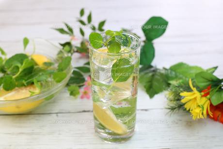レモン水の写真素材 [FYI01160057]