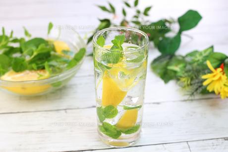 レモン水の写真素材 [FYI01160059]