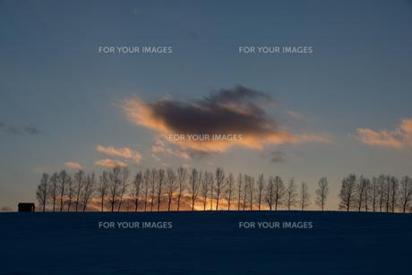 冬の夕暮れの空とシラカバ並木 美瑛町の写真素材 [FYI01160080]