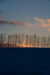冬の夕暮れの空とシラカバ並木 美瑛町の写真素材 [FYI01160081]