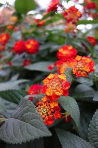 花の写真素材 [FYI01160195]