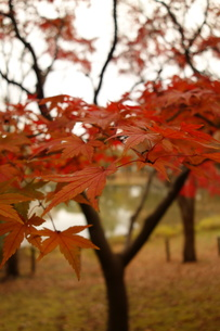 都内の紅葉の写真素材 [FYI01160208]