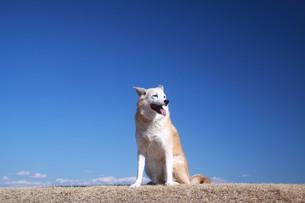 笑顔で座る犬と青空の写真素材 [FYI01160365]