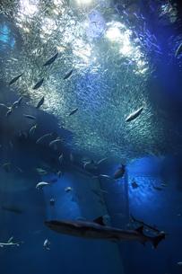 海の生き物 の写真素材 [FYI01160373]