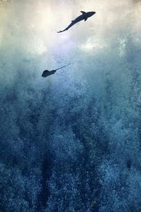 海の生き物 の写真素材 [FYI01160376]