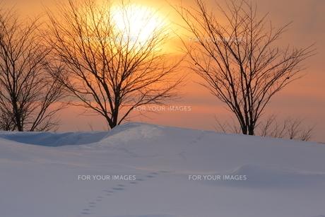 夕日の雪原の足跡の写真素材 [FYI01160416]