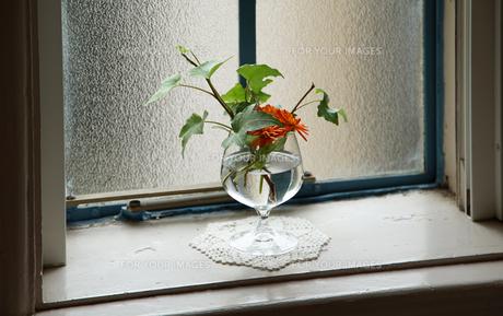 部屋の窓のそばに飾られた花の写真素材 [FYI01160495]