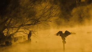 朝靄の中の写真素材 [FYI01160541]