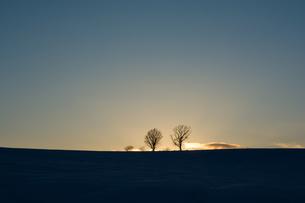冬の夕暮れと冬木立 美瑛町の写真素材 [FYI01160588]