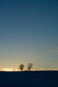 冬の夕暮れと冬木立 美瑛町の写真素材 [FYI01160589]