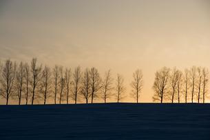 冬の夕暮れとシラカバ並木 美瑛町の写真素材 [FYI01160600]