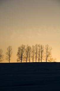 冬の夕暮れとシラカバ並木 美瑛町の写真素材 [FYI01160601]