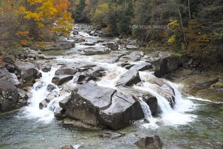 木曽赤沢渓谷の紅葉の写真素材 [FYI01160621]
