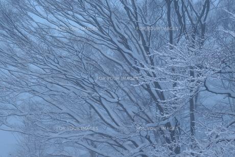 雪化粧した樹木の写真素材 [FYI01161308]