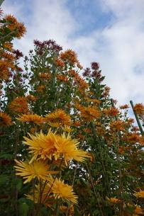 空を見上げる花の写真素材 [FYI01161323]