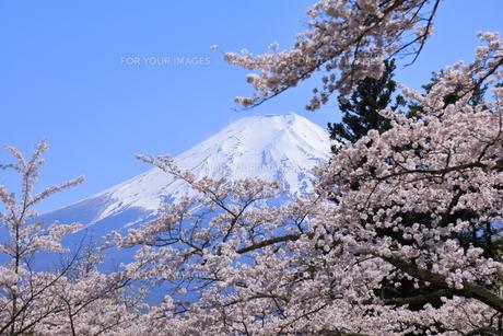 富士山の写真素材 [FYI01161623]