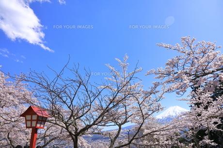 富士山の写真素材 [FYI01161624]
