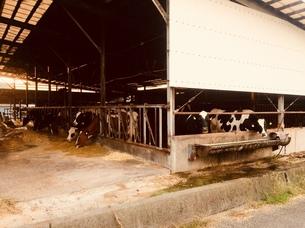牛舎の写真素材 [FYI01161646]