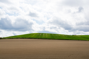 丘陵地帯の春の畑の写真素材 [FYI01161652]