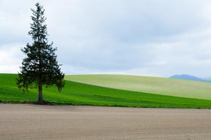 丘陵地帯の春の畑の写真素材 [FYI01161653]