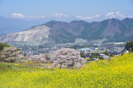 信濃路の春景色の写真素材 [FYI01161668]