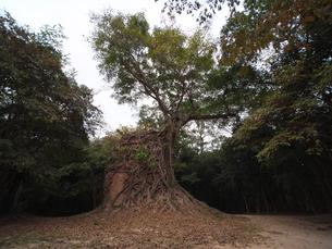 世界遺産 カンボジア サンボール・プレイ・クック遺跡の写真素材 [FYI01161703]