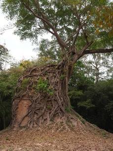 世界遺産 カンボジア サンボール・プレイ・クック遺跡の写真素材 [FYI01161704]
