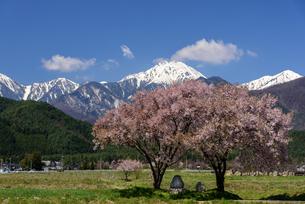 常念道祖神の桜の写真素材 [FYI01161802]