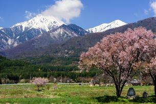 常念道祖神の桜の写真素材 [FYI01161804]