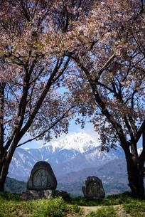 常念道祖神の桜の写真素材 [FYI01161807]
