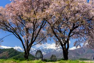常念道祖神の桜の写真素材 [FYI01161808]