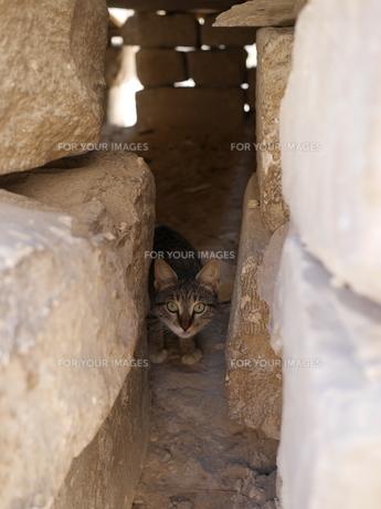エジプト ギザの太陽の舟近くの石積みの家で見かけた猫の写真素材 [FYI01162181]