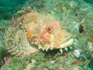 串本の魚の写真素材 [FYI01162199]