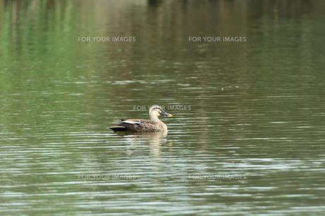宮古島/冬の干拓池の写真素材 [FYI01162215]