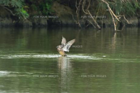 宮古島/冬の干拓池の写真素材 [FYI01162217]