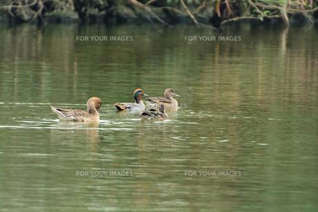 宮古島/冬の干拓池の写真素材 [FYI01162231]