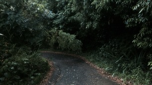 山道の写真素材 [FYI01162270]