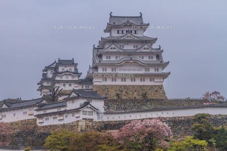 春の姫路城の風景の写真素材 [FYI01162525]