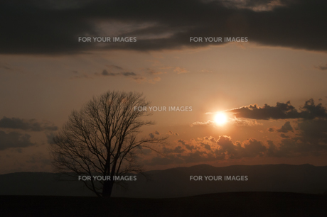 春の夕暮れと冬木立の写真素材 [FYI01163025]