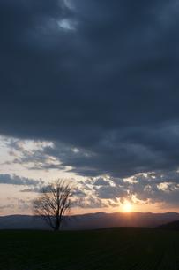 春の夕暮れと冬木立の写真素材 [FYI01163026]