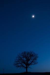 春の夜の月と冬木立 美瑛町の写真素材 [FYI01163029]