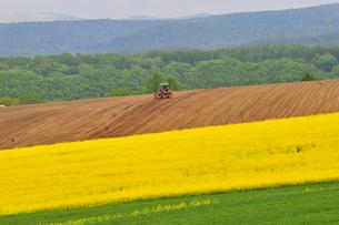 ナノハナ畑と農作業の写真素材 [FYI01163030]