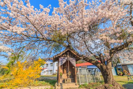 春のみなかみ町の地蔵堂の風景の写真素材 [FYI01163106]