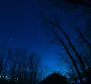 森の夜空(ブルー)の写真素材 [FYI01163199]