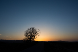 春の夕暮れと冬木立の写真素材 [FYI01164124]