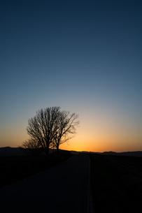 春の夕暮れと冬木立の写真素材 [FYI01164125]