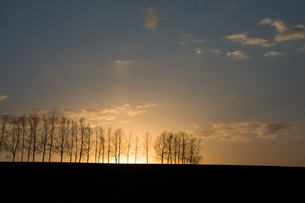 春の夕暮れ 美瑛町の写真素材 [FYI01164127]